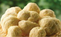 白扒猴头蘑